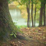 Prześliczny oraz {zadbany zieleniec to nie lada wyzwanie, w szczególności jak jego konserwacją zajmujemy się sami.